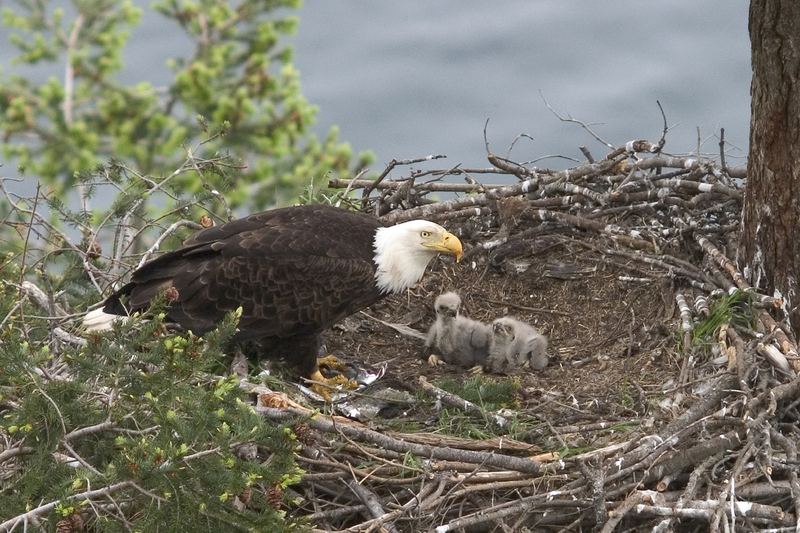 Spiritual Lessons From the Eagles' Nest! Image